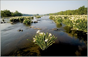 The Catawba River in Bloom