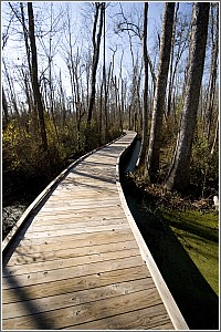 The Boardwalk at Lee State Park